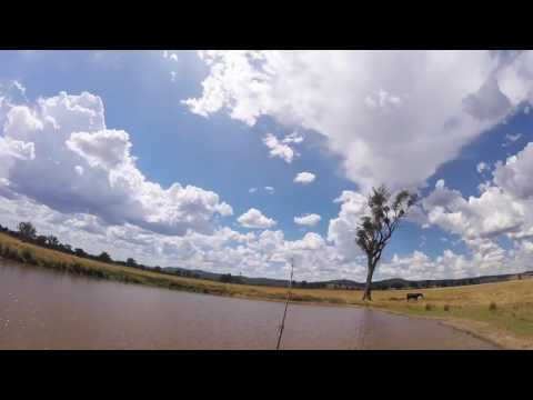 Dam fishing for Yellow belly