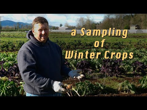 Winter Vegetable Farming - A Farmer's Insights