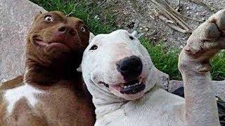 Смешные собаки Приколы про собак Funny Dogs 2019 (Наиболее Поетшные шриколы)