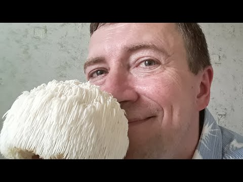 Как в домашних условиях вырастить ледяной гриб