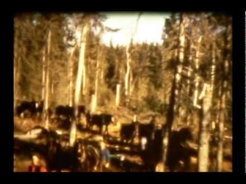 Logging in Lake-Pogamasing-Part I: Cutting-and-Hauling.avi