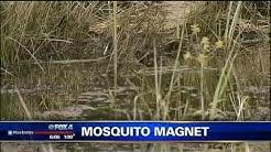 Lewisville mosquito problem