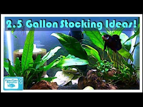 5 gallon tank stocking options | Tank i, Gallon, Tank
