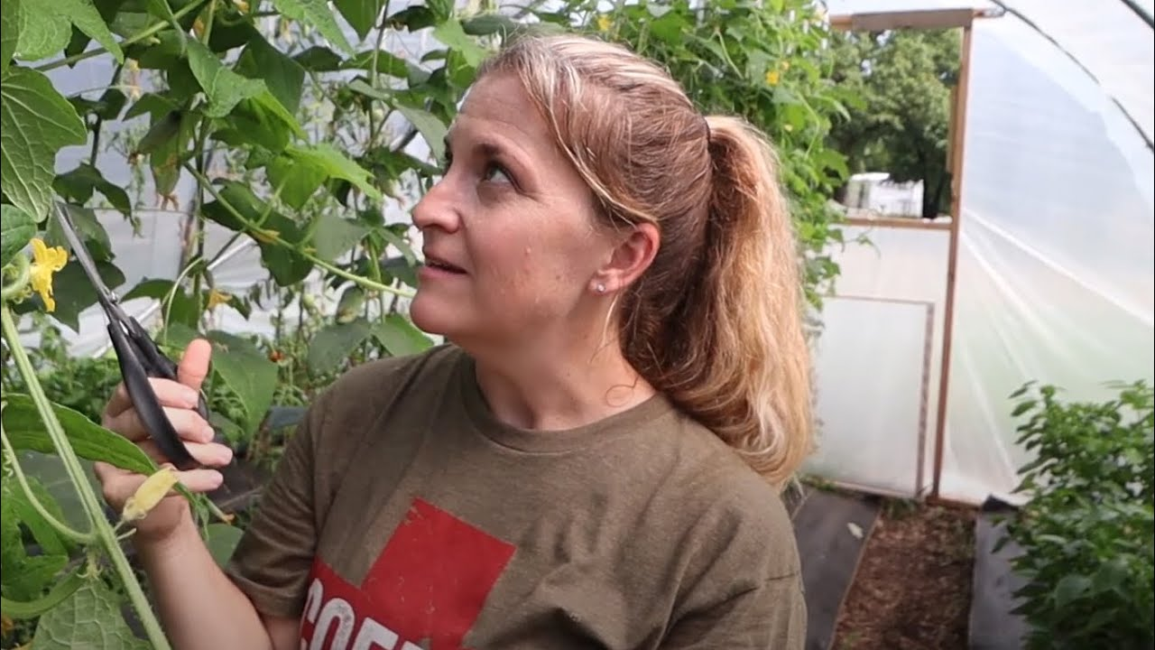 Pruning Cucumbers for Maximum Production | Family of 5 Grows All Their Food