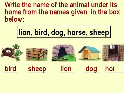 graphic relating to Animal Trivia Questions and Answers Printable identified as Cl 1 EVS Pets, Birds and Bugs Issues and Solutions for Little ones