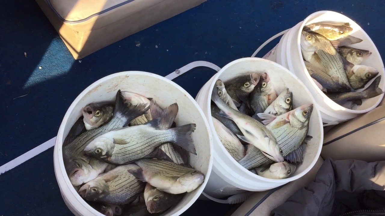 Whitebass fishing fremont wi youtube for Fremont wi fishing report