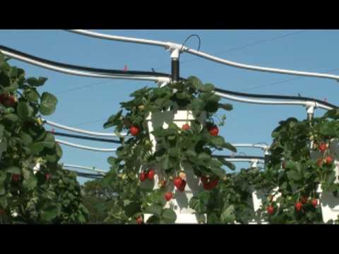 Raymon and Verti-Gro, vertical hydroponic Garden System