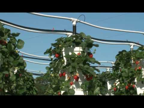 Raymon and Verti Gro vertical hydroponic Garden System YouTube