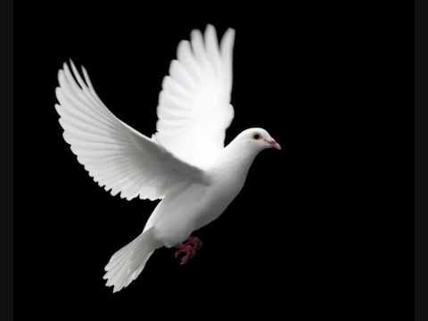 גד אלבז ציפור גן עדן