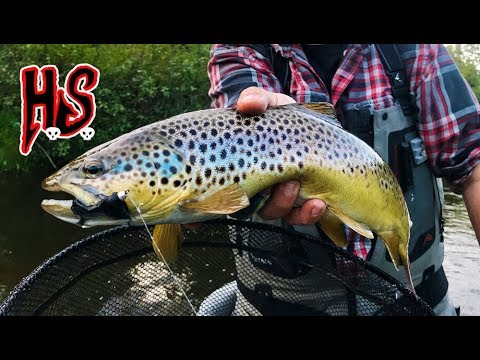 Mounting a Brooktrout: PART 1