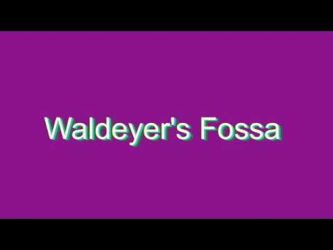 how to pronounce waldeyer's fossa - youtube, Human Body