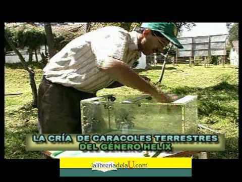 Helicultura cr a de caracoles youtube for Como hacer un criadero de cachamas