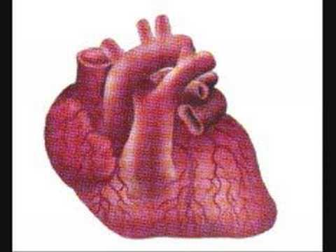 Hjertet og lungene