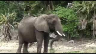Kilimanjaro Safari and Animals at Disney's Animal Kingdom