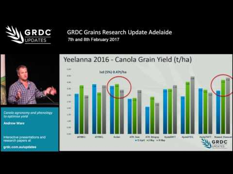 Grains Research Update 2017 | Adelaide | Canola phenology: sowing to maximise yield - A. Ware