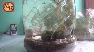 aquascape buatan sendiri dari bekas galon air mineral