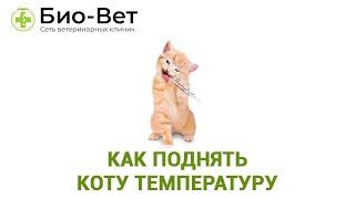 Как поднять коту температуру. Ветеринарная клиника Био-Вет.
