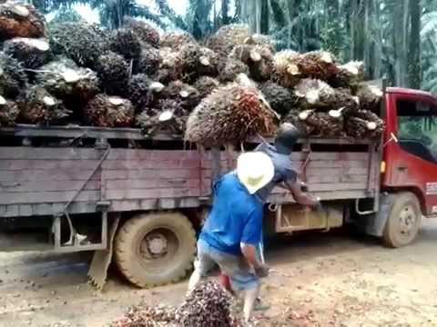 loading buah kelapa sawit