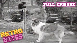 Lassie | The Watch Dog | Full Episodes