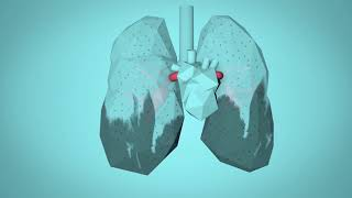 Video WHO: BreatheLife - How air pollution impacts your body download MP3, 3GP, MP4, WEBM, AVI, FLV Agustus 2018