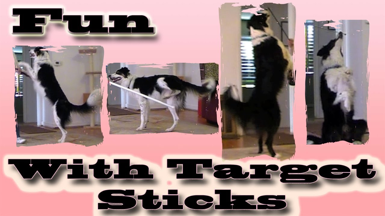 Fun With Target Sticks Clicker Dog Training Youtube