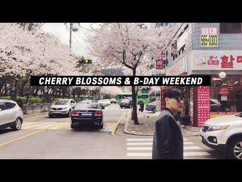 VLOG | Cherry Blossoms in Seoul 🌸 & Kyuho's B-Day 4월의 눈 벚꽃시즌이 제 생일이랍니다!