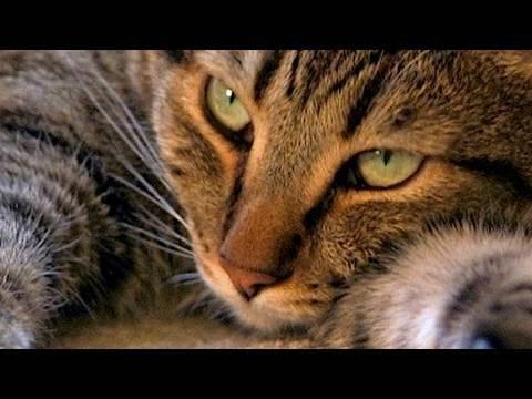 Mean Kitty iz Not Amuzed
