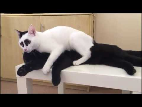 dancing cats vines (famous video clips compilation)