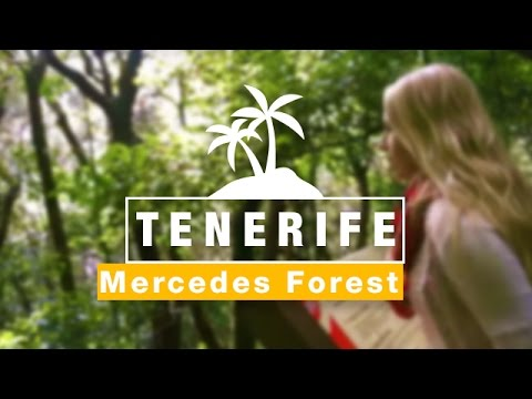 Mercedes Forest, Anaga Mountains | Things To Do in TENERIFE