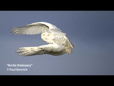 Arctic Emissary: Conservation Stories From Behind the Lens