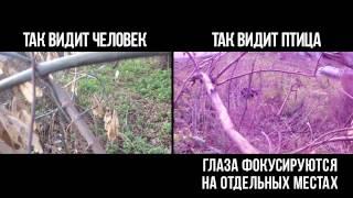 """Копия видео """"Как животные видят мир"""""""