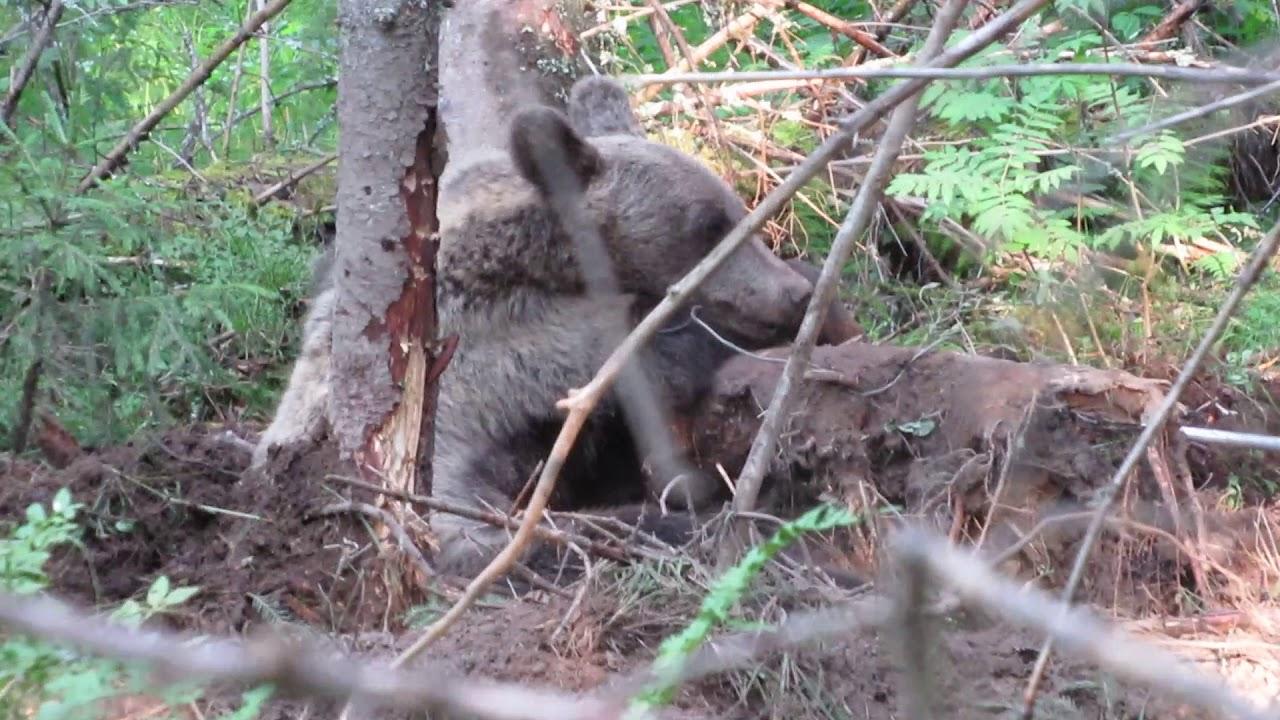 петля на медведя фото салат