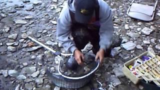 27 inch steelhead rainbow trout from fishing the rocky river ohio mr chomp