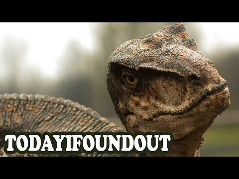 The Truth About Velociraptors