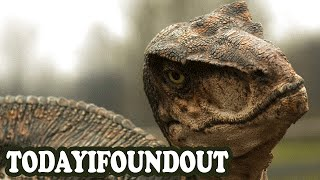 The Truth About Velociraptors