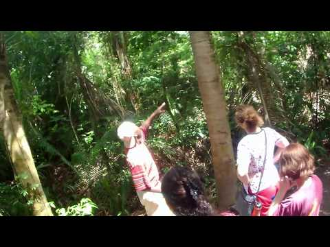 Study Traditional Medicine in Belize