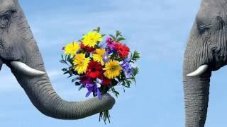 видео Сколько весит слон: интересные факты
