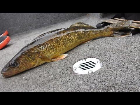 Walleye Fishing Wi. River, (castlerock)