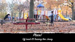 Rescue Doberman Off Leash K9 Training New Jersey Before And After