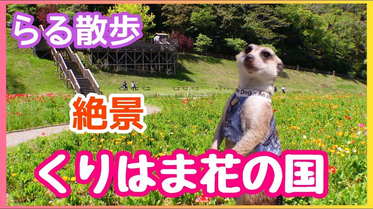 【らる散歩】くりはま花の国へ[ミーアキャット]