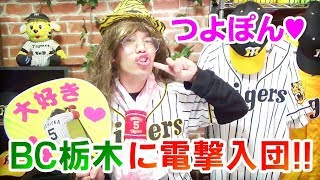 西岡剛ファン歓喜!BC栃木ゴールデンブレーブスに入団決定!背番号は1!