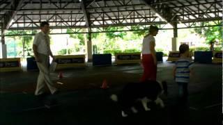 Dog Training Singapore - Isaac In Novice Class