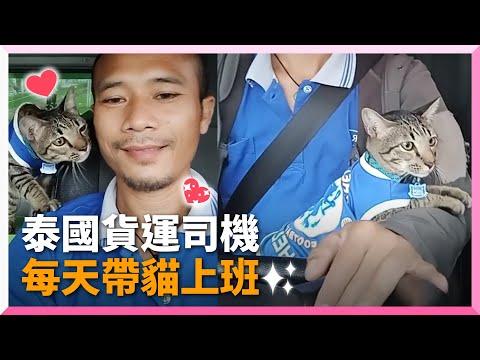 虎斑貓每天陪貨車司機爸上班!車上還有專屬便當盒、貓砂盆 寵物動物 貓咪 乖巧 泰國 精選影片