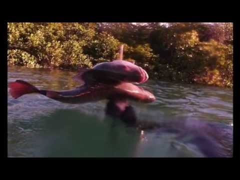 Spearfishing Central Coast Queensland