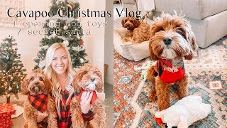Cavapoo Christmas Special Vlog | Archie & Alfred