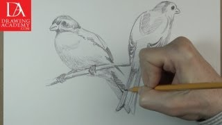 How to Draw Birds presented by Drawing Academy .com 39-2