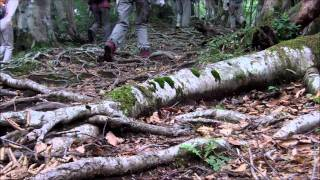 Mother Forest  母なるブナ林・岡山森林公園