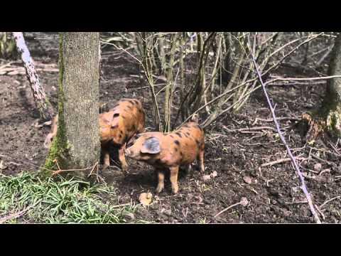 Permaculture:  A visit to Landews Meadow Farm Kent, UK