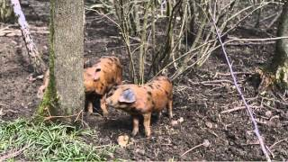 Permaculture:  A visit to Landews Meadow Farm Kent, UK