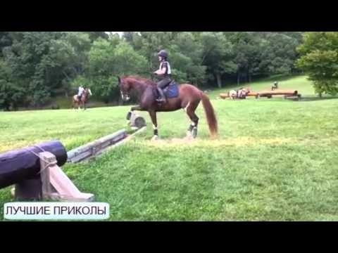 Смешные животные - лошади » Видео приколы на ютубе онлайн